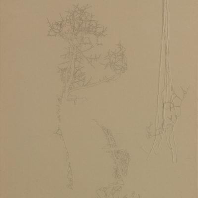 Senza titolo, 2006.  Matita e filo da cucire su tela grezza.  90x70cm