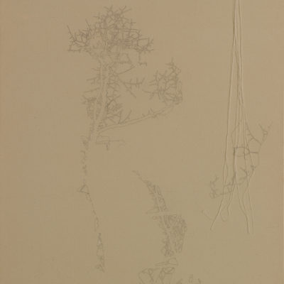 Untitled, 2006.  Pencil and sewing thread on raw canvas. 90x70cm/35.4x27.5in